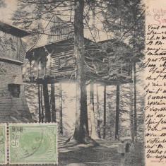 SINAIA CUIBUL PRINTESEI TCV CLASICA CIRCULATA 1906 - Carte Postala Muntenia pana la 1904, Printata