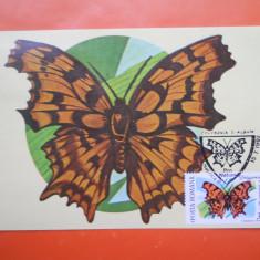 HOPCT MAXIMA 26264 POLYGONIA C-ALBUM - LOT FLUTURI 1991, Romania de la 1950