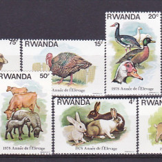 Fauna, animale domestice, Rwanda. - Timbre straine, Nestampilat