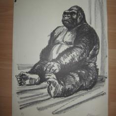 LITOGRAFIE MARCEL CHIRNOAGA - Pictor roman, Animale, Cerneala, Abstract
