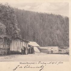 PIATRA NEAMT  MOARA  DIN  BROSTENI  CLASICA  TCV  CIRCULATA  1904, Printata