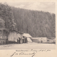 PIATRA NEAMT MOARA DIN BROSTENI CLASICA TCV CIRCULATA 1904 - Carte Postala Moldova pana la 1904, Printata