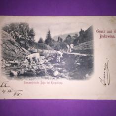 Bukowina - Campulung - Port Popular - Carte Postala Bucovina 1904-1918, Circulata, Fotografie