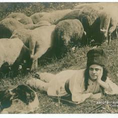 3362 - Cioban, Sheperd, dog and sheeps - old postcard, real PHOTO - unused - Carte postala tematica, Necirculata, Printata
