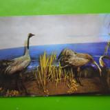 HOPCT 17536 MUZEUL DELTA DUNARII -COCORII-JUD TULCEA [NECIRCULATA] - Carte Postala Dobrogea dupa 1918, Printata