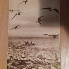 MUZEUL ANTIPA - BUCURESTI - Carte Postala Muntenia dupa 1918, Necirculata, Fotografie