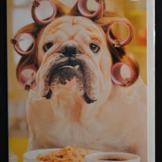 Felicitare cu plic- Caine, bulldog cu bigudiuri, dimineata - nou, Germania! #149