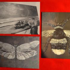 Carte postala(ilustrata)Lot 3 CP-Pictura,Arta de Alice Robinson-insecte,cai #146