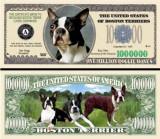 USA 1 Million Dollars UNC Caine Boston Terrier