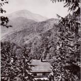 MUNTII FAGARAS CABANA POIANA NEAMTULUI 1967 - Carte Postala Muntenia dupa 1918, Circulata, Fotografie