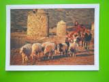 HOPCT  22235  GRECIA CRETA -SPINALONGA/CIOBANI ECIRCULATA]