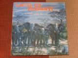Lacul cu elefanti Mihai Tican Rumano disc vinyl lp dramatizare povesti copii, VINIL, electrecord