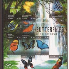 St. Kitts - caribbean fluturi, Natura, America Centrala si de Sud
