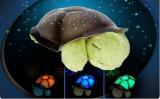 Cumpara ieftin Lampa de  veghe copii Proiector tavan broscuta testoasa muzicala + cablu USB