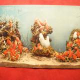 Ilustrata interbelica - Acvariul din Monaco, Necirculata, Fotografie