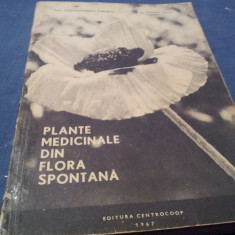 PLANTE MEDICINALE DIN FLORA SPONTANA