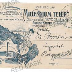 710 - Timis, TOMNATIC, cultura Vita de Vie 500 Acri - old postcard - used - 1915 - Carte Postala Banat 1904-1918, Circulata, Printata