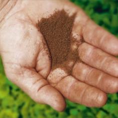Seminte de tutun BURLEY-15-grame=15ron.Calitate superioara.