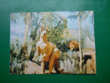 HOPCT 17451  MUZ ISTORIE NAT GR. ANTIPA BUCURESTI -CANGURI -NATUR-[NECIRCULATA], Printata