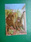 HOPCT 17484  GORILE DE MUNTE DIN UGANDA /MUZEUL GR ANTIPA -NATURA-[NECIRCULATA]
