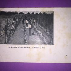 Prizonieri romani liberati lucrandu-si via - Carte Postala Muntenia 1904-1918, Circulata, Fotografie