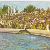 CARTE POSTALA CONSTANTA - DELFINARIU CIRCULATA 1986 - Carte Postala Dobrogea dupa 1918, Fotografie