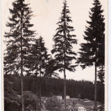CARTE POSTALA BORSEC CIRCULATA 1944 - Carte Postala Transilvania dupa 1918, Fotografie