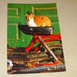 Pisica - animale - Grecia - 2+1 gratis - RBK15578 - Carte postala tematica, Circulata, Printata