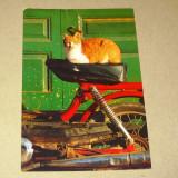 Pisica - animale - Grecia - 2+1 gratis - RBK15618 - Carte postala tematica, Circulata, Printata