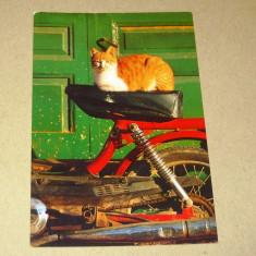 Pisica - animale - Grecia - 2+1 gratis - RBK15618