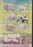 Fauna ,animale domestice ,oi ,Argentina.