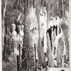 Bnk cp Bucuresti - Muzeul de Istorie Naturala Gr Antipa - necirculata - Carte Postala Muntenia dupa 1918, Printata