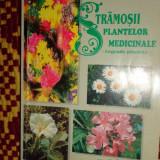 Stramosii plantelor medicinale - legende pierdute 355pag/an 1998- E.Grigorescu