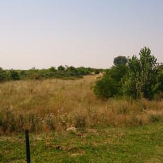 Teren (5 loturi), Peciu Nou, Timis - Teren de vanzare, 49823 mp, Teren extravilan