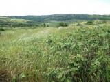 Teren 7616 mp (2 loturi) in Paleu,Oradea, Teren intravilan