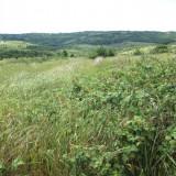 Teren 7616 mp (2 loturi) in Paleu, Oradea - Teren de vanzare, Teren intravilan