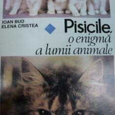 PISICILE O ENIGMA A LUMII ANIMALE IOAN BUD SI ELENA CRISTEA, BUC. 1995 - Carte Biologie
