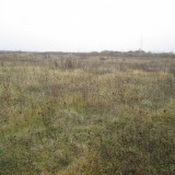 Teren 5000 mp, Chiajna, Ilfov - Teren de vanzare, Teren intravilan