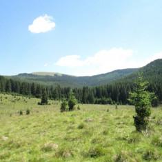 Teren 6640 mp in Moroeni, Dambovita - Teren de vanzare, Teren intravilan