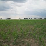 Teren agricol 5, 000 mp in Clinceni, Ilfov - Teren de vanzare, Teren extravilan
