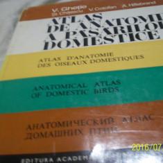 Atlas de anatomie a pasarilor domestice - v. ghetie- 1976 - Carte Medicina veterinara
