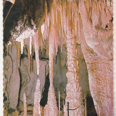 Bnk cp Bucuresti - Muzeul de istorie naturala Gr Antipa - Pestera - necirculata - Carte Postala Muntenia dupa 1918, Printata