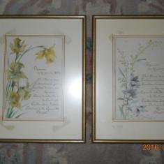Doua meniuriDejeuner du 27 janvier 1894,cu decor floral acuarelat/carton desen