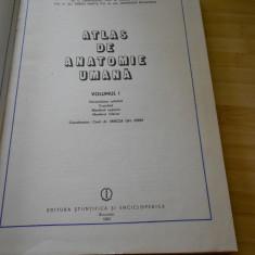 IFRIM--C. CERBULESCU--ATLAS DE ANATOMIE UMANA - VOL. 1 - 1983