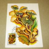 Maxima plante - ciuperci - Rusia - 2+1 gratis - RBK14370