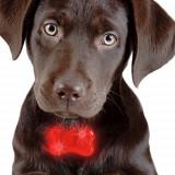 Plăcuţă de identificare cu LED pentru Câini
