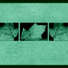 Set tablou fosforescent Frunze de toamna - Tablou canvas