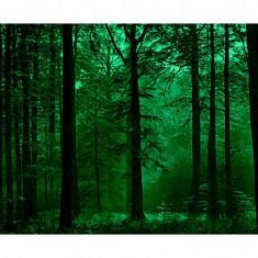 Fototapet fosforescent Padure