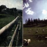 peisaje mioritice, 2 cartele Romtelecom