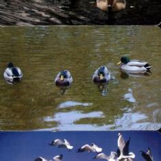 păsări, 3 cartele Romtelecom